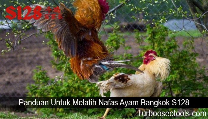 Panduan Untuk Melatih Nafas Ayam Bangkok S128